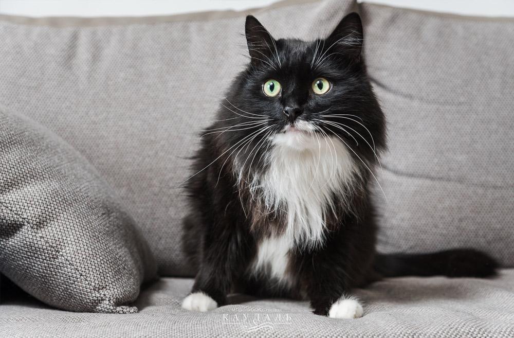 Котики и стильная мебель